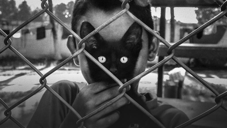 Wyróżniona praca Polaka - Arka Rataja - 'Cat's Eyes'