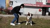 Strażnicy miejscy prześwietlą ci psa!