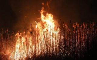 Ponad 100 strażaków nadzorowało w nocy pogorzelisko w Biebrzańskim Parku Narodowym