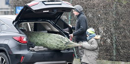 Pascal Brodnicki kupuje choinkę z synem