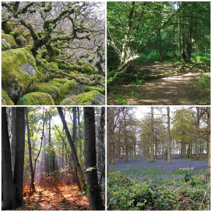 Šume, Velika Britanija, kombo
