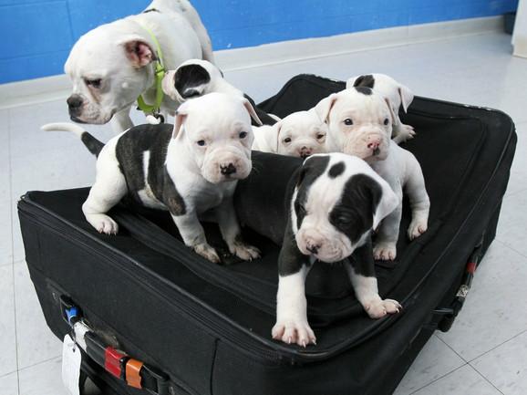 izlazi sa stafordshire psima
