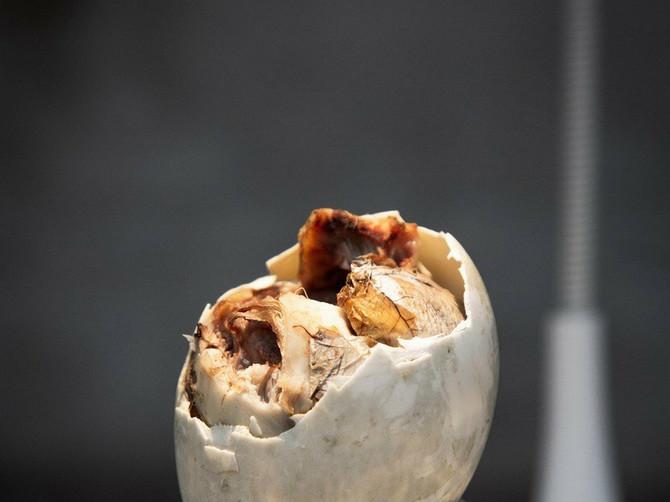 HRSKAVA GLAVA PACOVA I FETUS PATKE Ovo je najodvratnija hrana na svetu i da biste je jeli, morate da imate kamen, a ne želudac