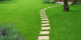 Gęsty i soczyście zielony trawnik w twoim ogrodzie. To ci w tym pomoże!