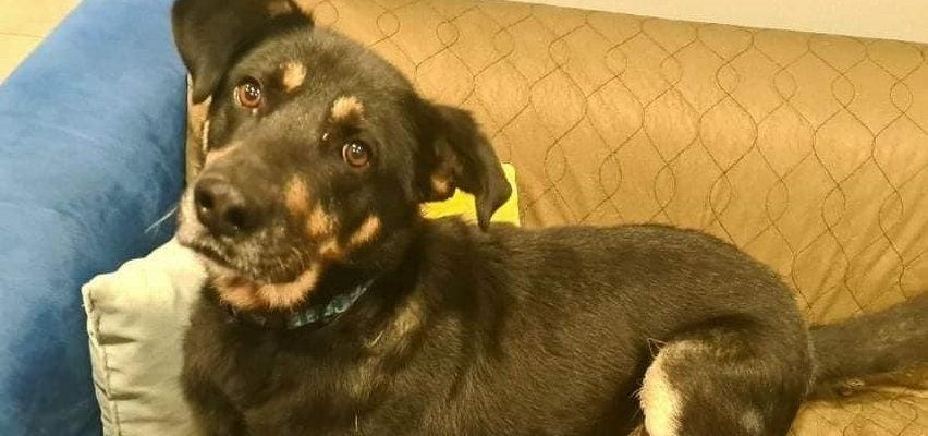Mazowieckie: nieznany sprawca obcina psom palce. Już trzeci okaleczony w ten sam sposób