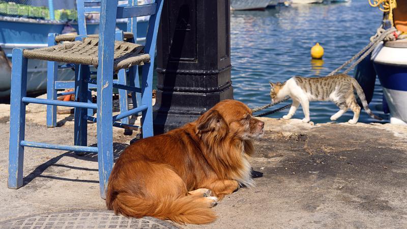Podróże w zamian za opiekę nad zwierzętami? Powstał serwis, który spełni to marzenie