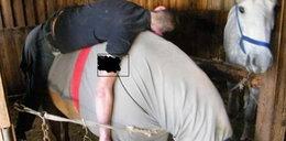 Koń poduszką dla pijaka
