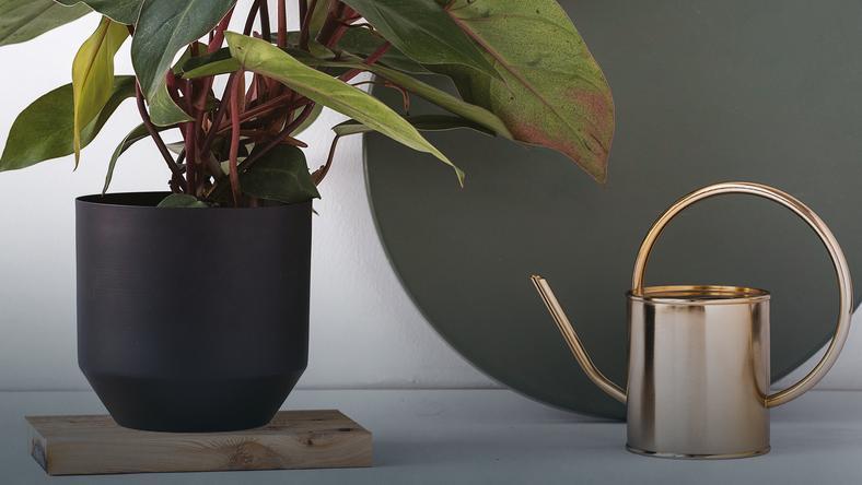 Jak Wybrać Doniczkę Dla Swojej Rośliny To Ważniejsze Niż