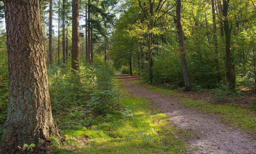 Szokujące znalezisko w lesie