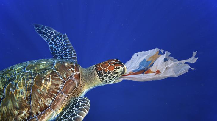 """A teknős egy műanyag zacskóval viaskodik: a """"se lenyelni, se kiköpni nem tudja"""" szólás itt különösen szomorú értelmet nyer/ Fotó: profimedia"""