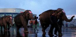 Słonie wyczyniają cuda! Niezwykłe zdjęcia