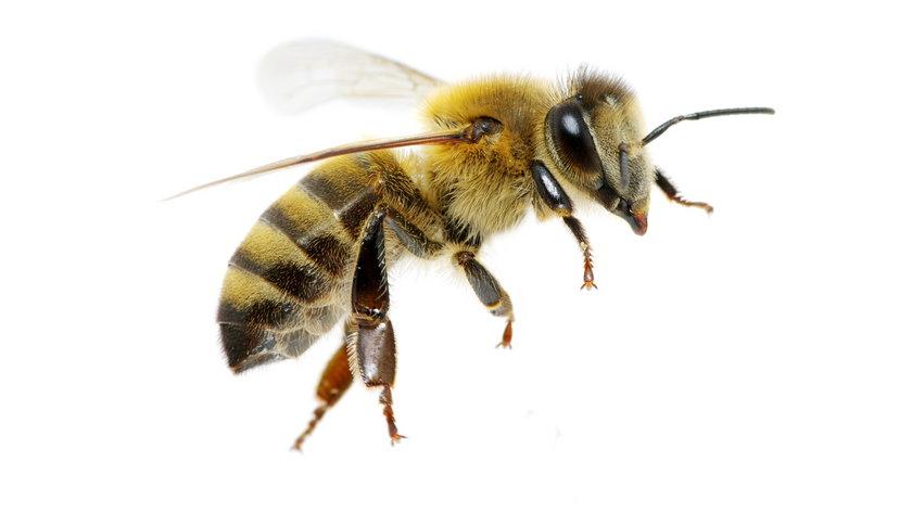 Minister Środowiska obwinia pszczoły o smog?