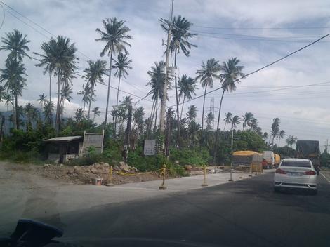Palme će zameniti badnjak