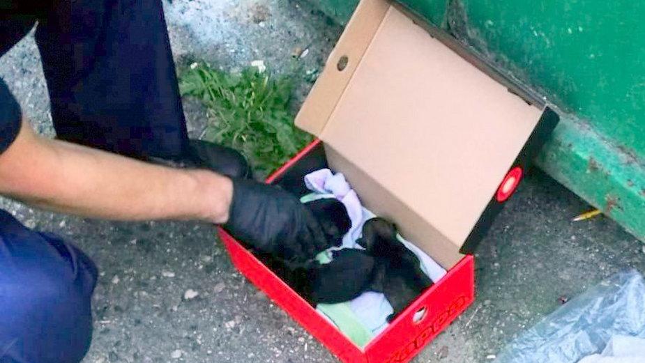 Szczeniaczki zostały zapakowane w worek foliowy i wrzucone do kubła na śmieci.