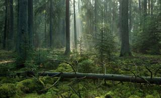 Lasy czekają na twój głos. Ostatnie godziny konsultacji