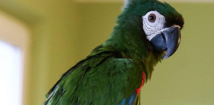 Papuga aresztowana! Ostrzegła dilerów przed nalotem policji