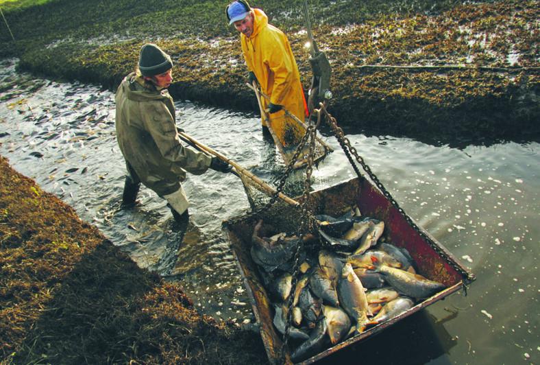 Tania ryba jest dobra, bo jest tania. Ale już nie jest dobra