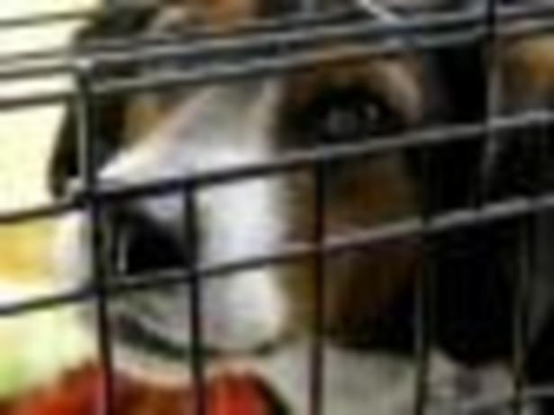 Nowela zwiększa kary za znęcanie się nad zwierzętami do dwóch lat ograniczenia lub pozbawienia wolności (obecnie jest to rok), a za znęcanie się ze szczególnym okrucieństwem - do trzech lat (obecnie - dwa lata). fot. shutterstock.com