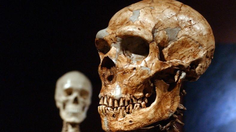 Jaskiniowcy z Hiszpanii byli kanibalami