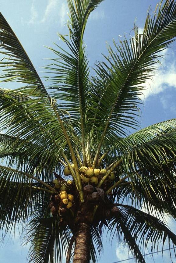 Palmi gotovo da nema