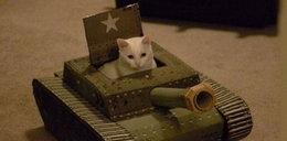 Koty się zbroją! Idą na wojnę?