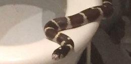 Wąż wypełzł z sedesu!