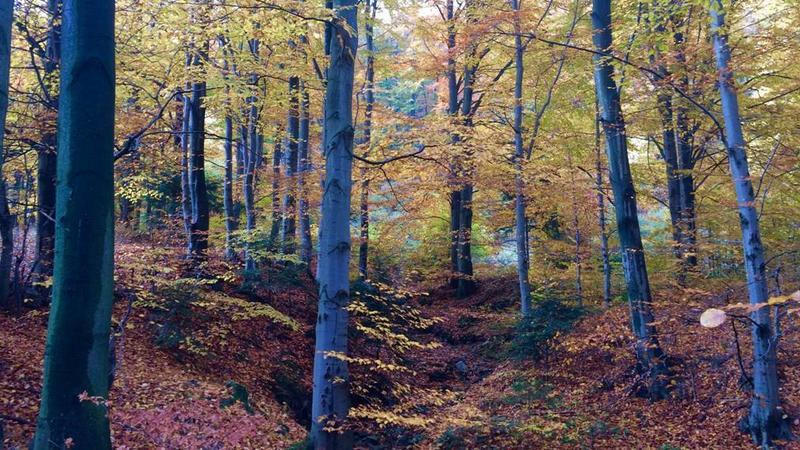 Beskid Mały na jesień