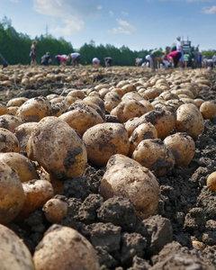 Lubisz ziemniaki? Sprawdź, jak je jeść, żeby schudnąć!