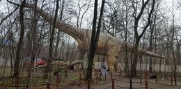 Największy dinozaur na świecie stanie w Zatorze