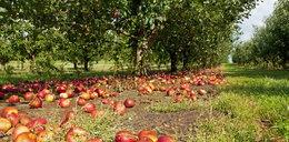 Czy w Polsce zabraknie owoców?