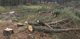 Koniec z samowolną wycinką drzew? Sejm zaostrzył przepisy