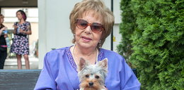 Zofia Czerwińska była miłośniczą psów. Co stało się z jej yorkiem?