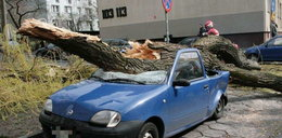 Tak drzewo runęło na auto. Sekundy wcześniej wysiadła z niego kobieta