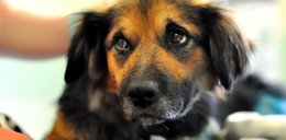 Okrutnik postrzelił psa z broni myśliwskiej