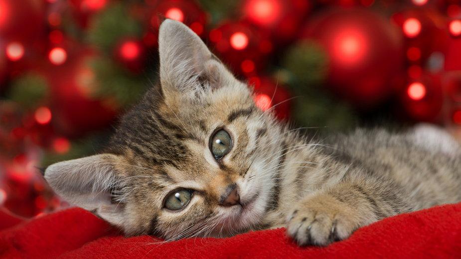 Koty kochają święta!