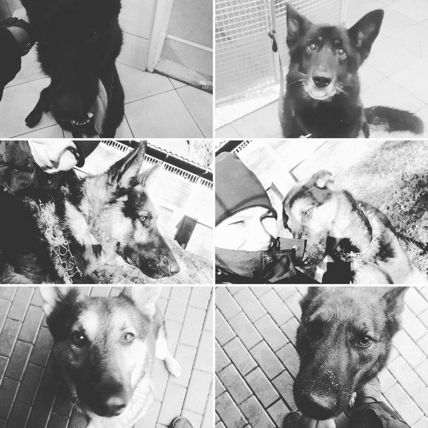 """""""Żegnajcie niebiescy bracia"""" - policjanci wspominają psy, które zginęły w Warszawie"""
