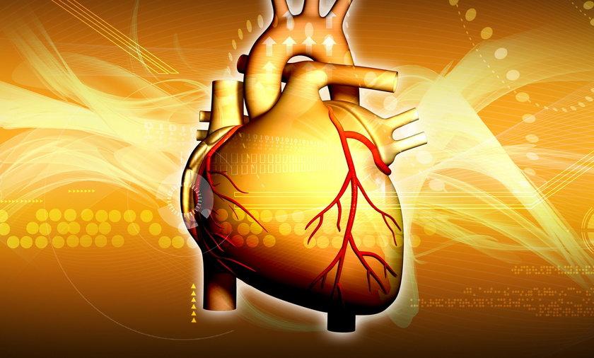 Serce to jeden z najważniejszych ludzkich narządów