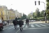 Konji Prokuplje