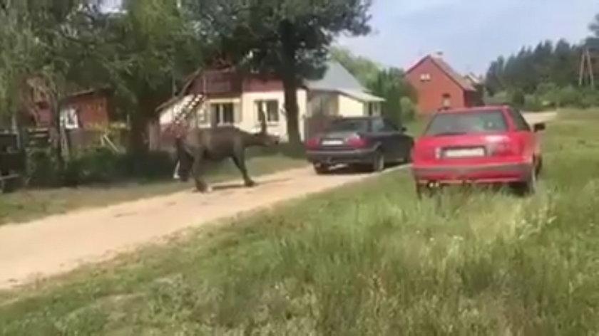 Jeden ciągnął autem, drugi bił. Drastyczne nagranie