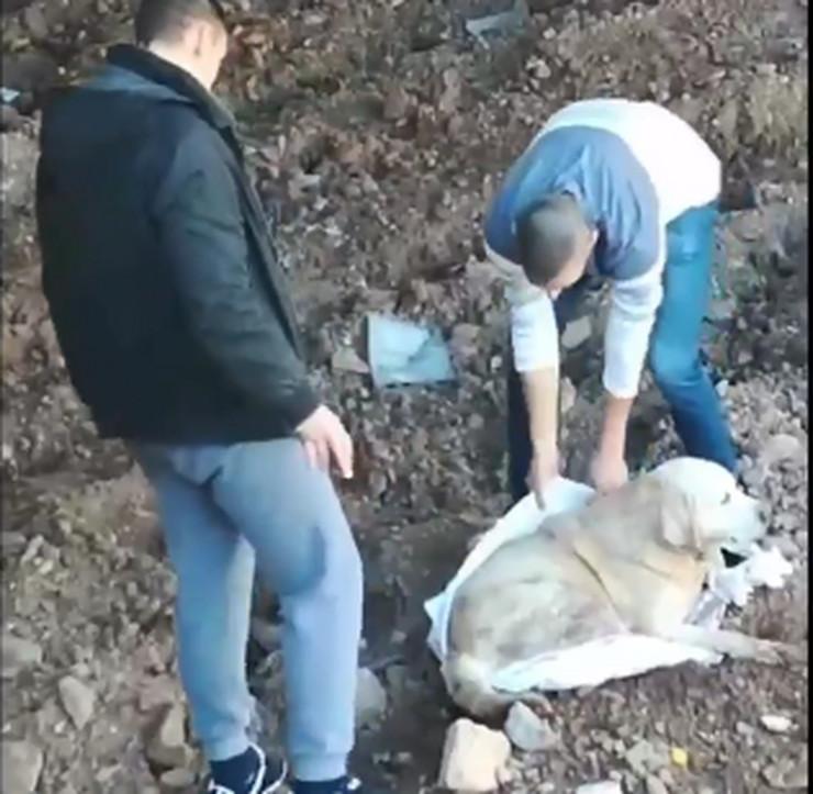 Mladići spasili psa iz reke, Paraćin