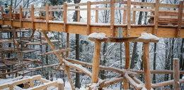 W Krynicy-Zdroju powstaje ścieżka w koronach drzewa