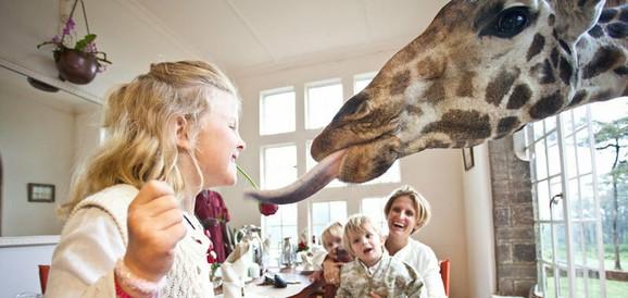 Žirafe kao kućni ljubimci u hotelu u Najrobiju