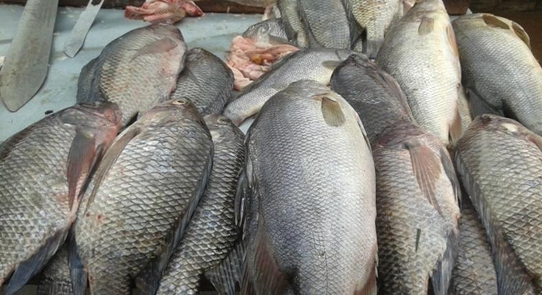 Fish on display at a market