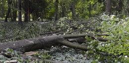 Tragedia w lesie. Drzewo przygniotło pilarza