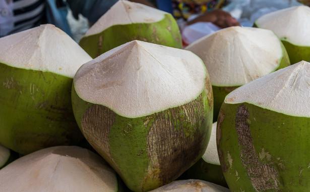 Młody kokos