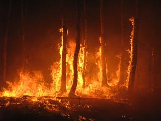 Gigantyczne pożary w Abruzji. Ludzie uciekli z plaż, w płomieniach stanęły palmy