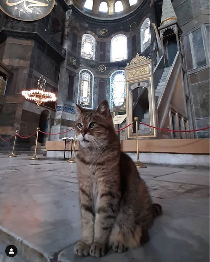 Mačka Aja Sofija
