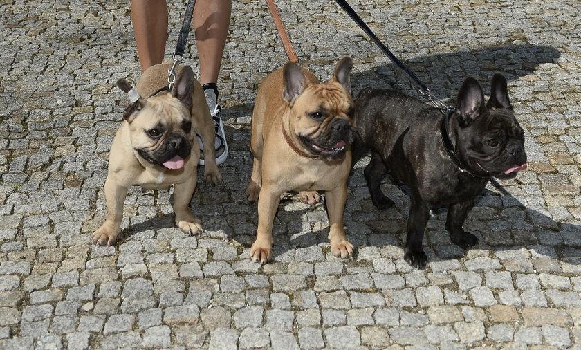 Małgorzata Rozenek Majdan z psami