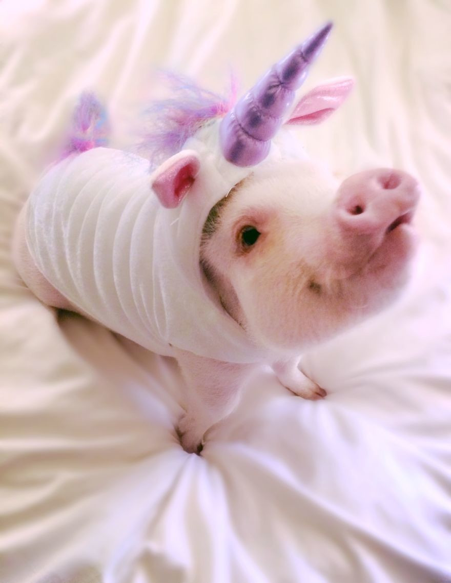 Instagram/@hamlet_the_pig
