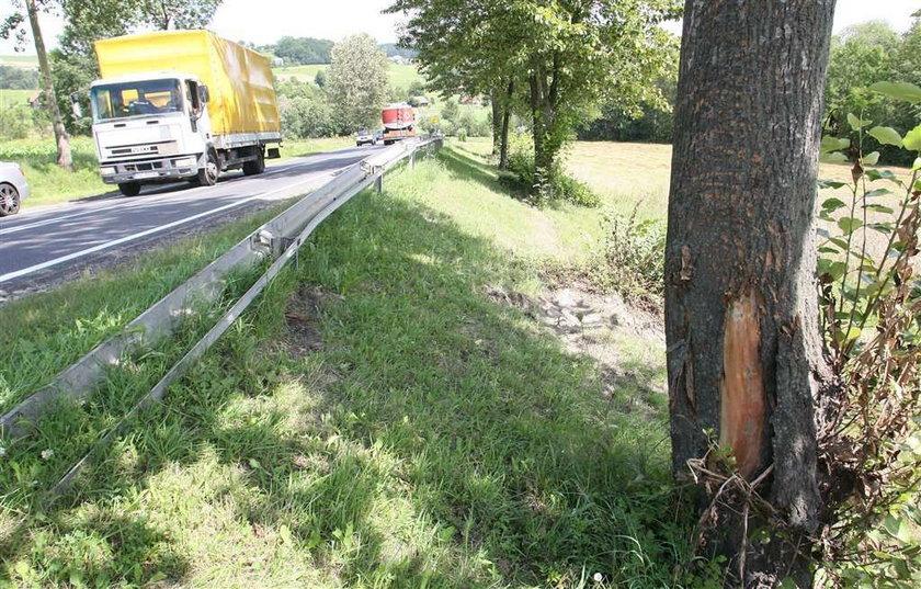 Pijany prokurator staranował drzewo